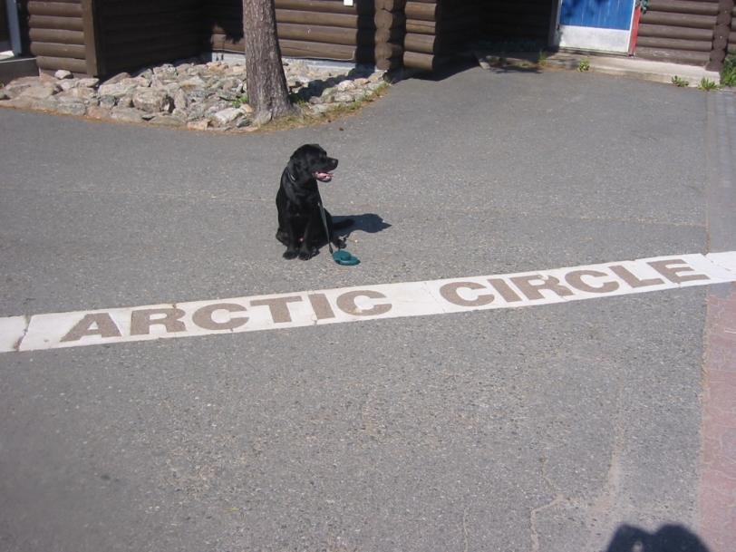 Polar dog.