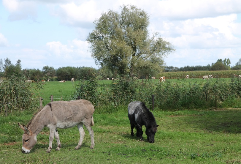 ...and some donkeys as well.